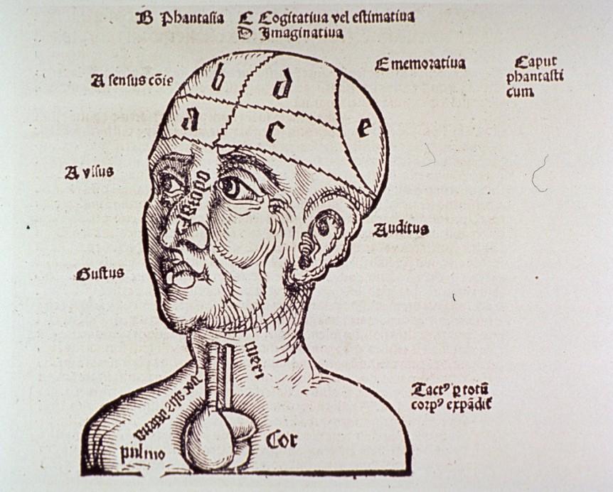 brain – Public Domain